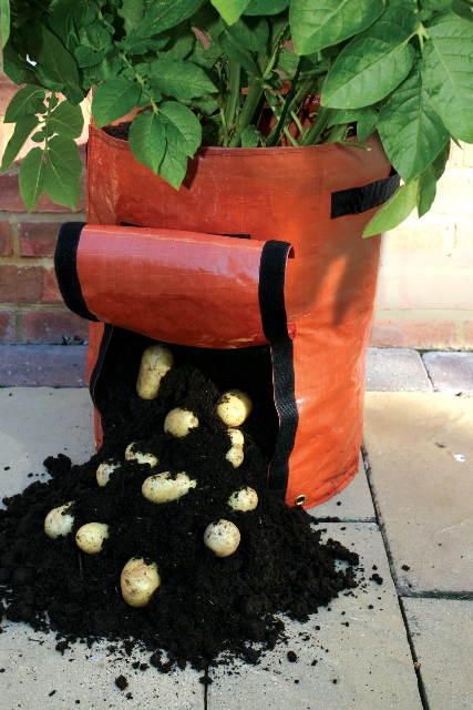 Saco para cultivar patatas 32 99 for Como cultivar patatas